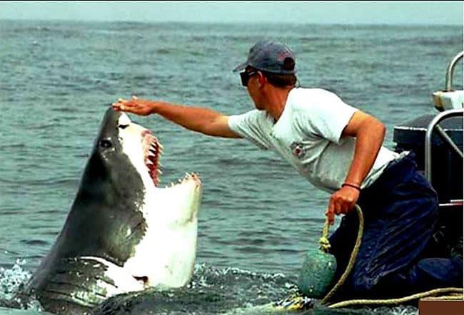 shark + a dummy